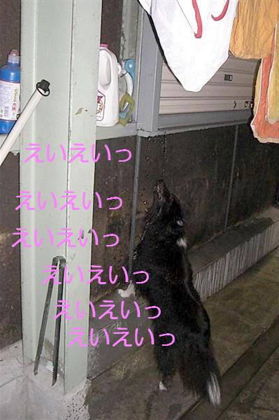 CIMG5940_Ra.jpg