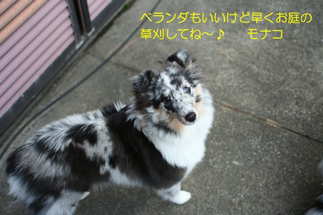 IMG_5367_1-a.jpg