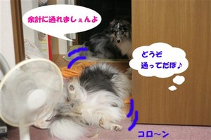 IMG_3035_Rc.jpg