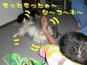 CIMG9204_R.jpg